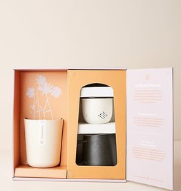 MODERN SPROUT MODERN SPROUT RITUAL GIFT KIT