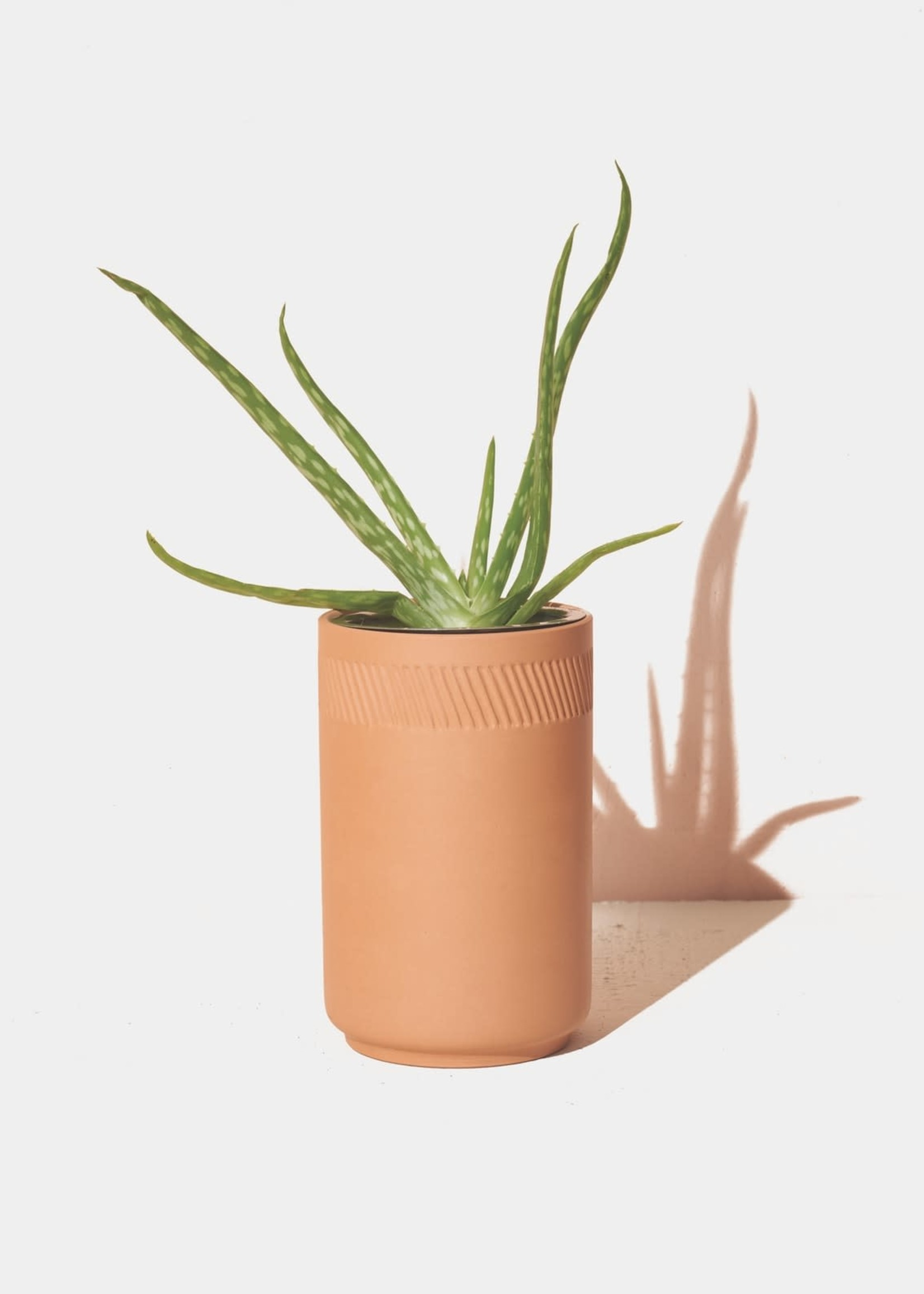 MODERN SPROUT MODERN SPROUT ALOE TERRACOTTA KIT