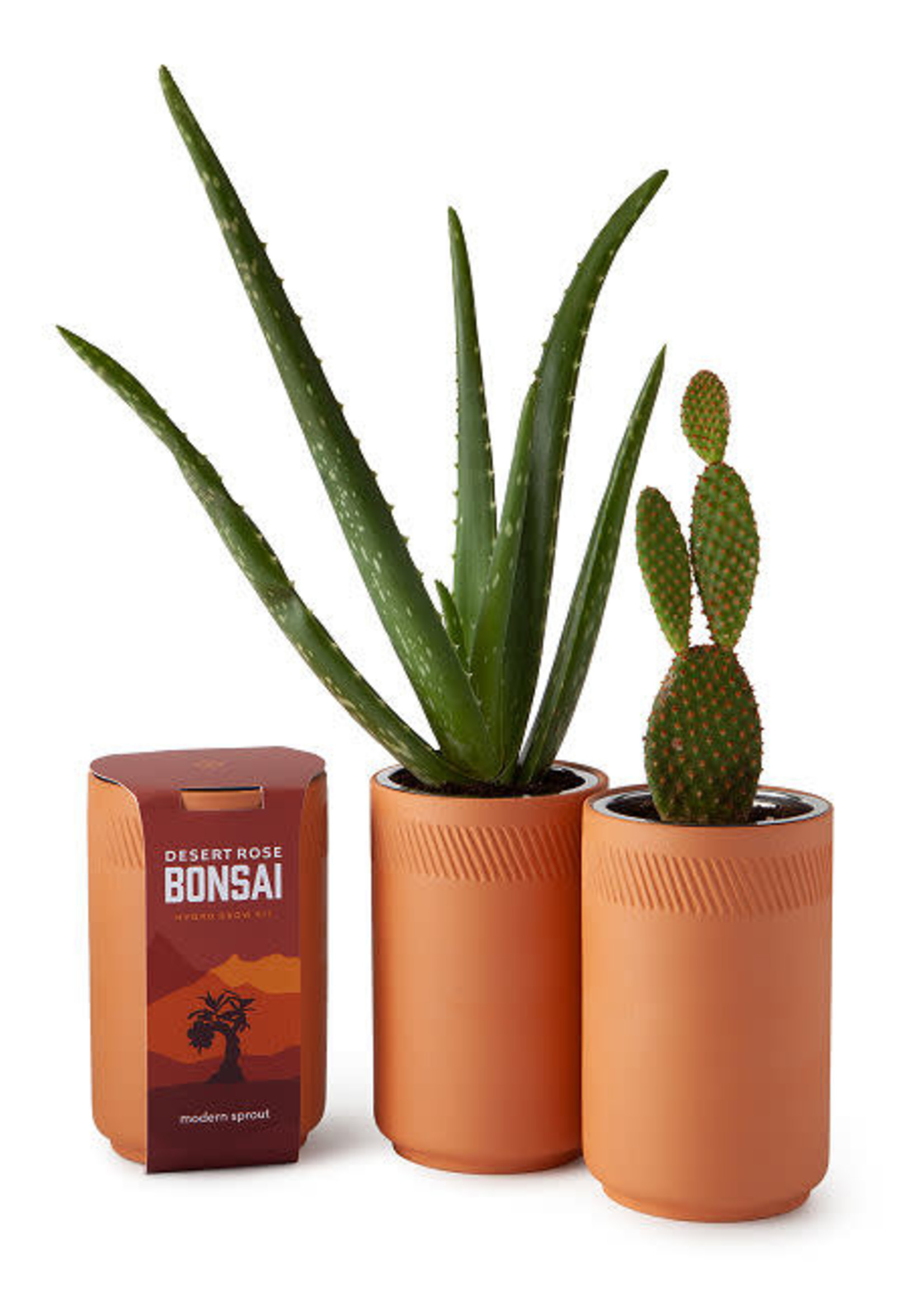 MODERN SPROUT MODERN SPROUT CACTUS TERRACOTTA KIT