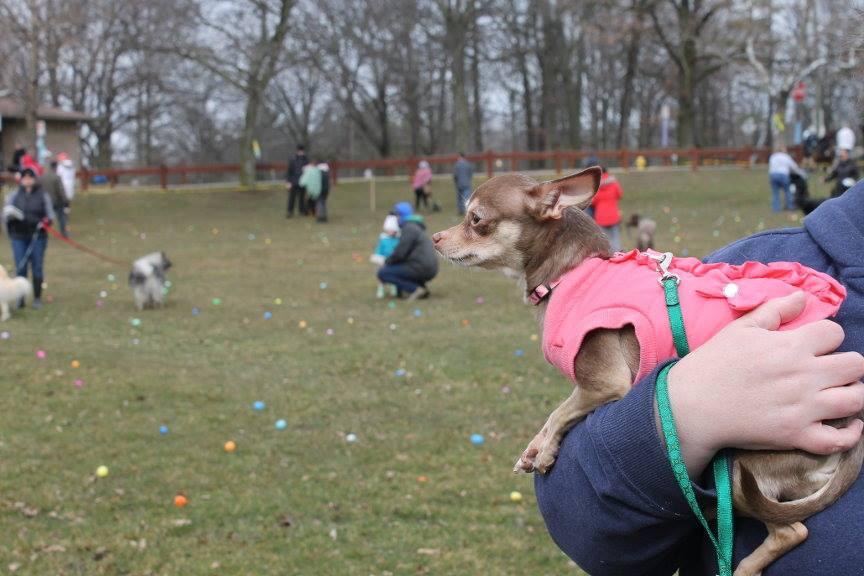 2018 Easter Egg Hunt for Dogs