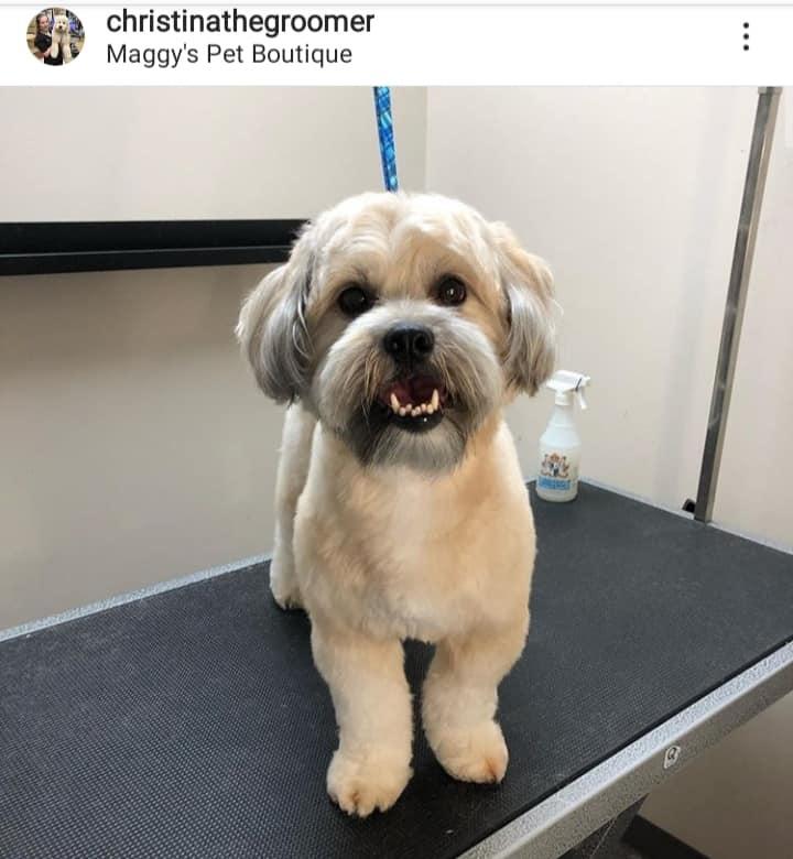 Beamsville Dog Grooming