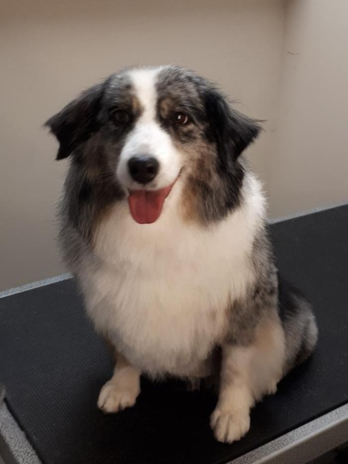 Beamsville Dog Groomer