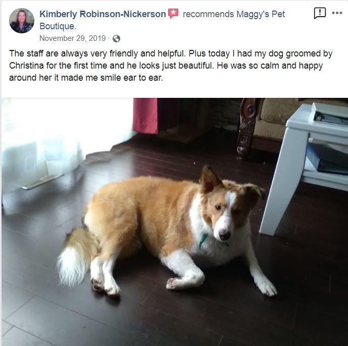 Best Dog Grooming in Beamsville