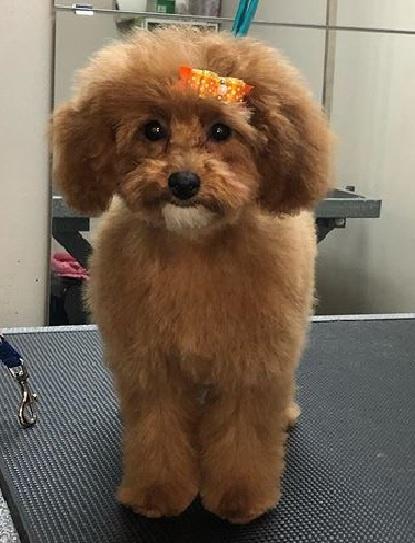 Beamsville Dog Grooming - Christina the Groomer