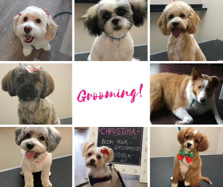 Dog Grooming at Maggy's