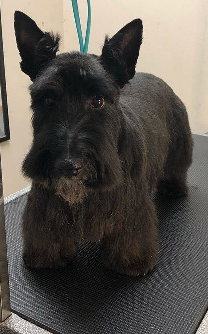 Dog Grooming in Beamsville - Town of Lincoln