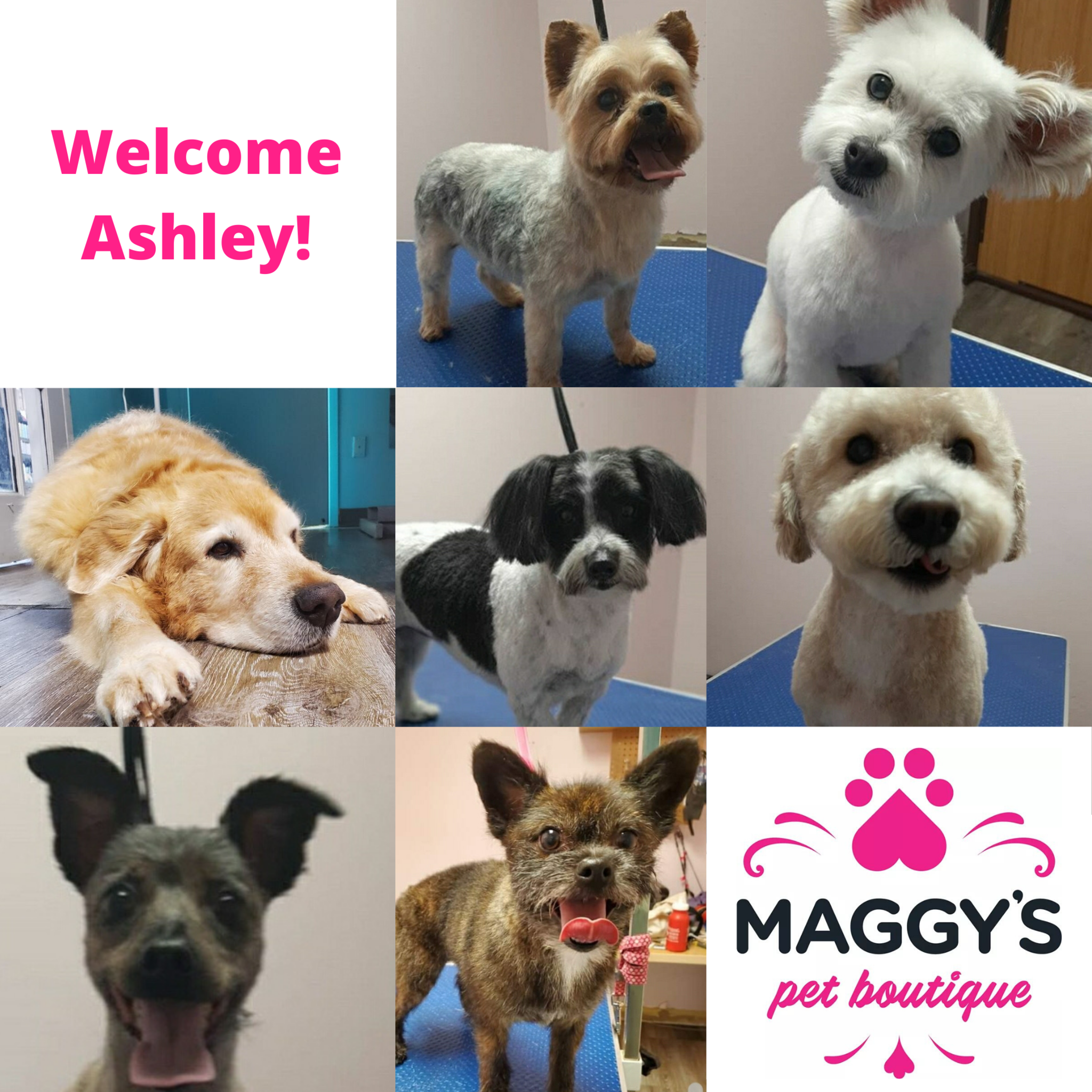 Welcome Ashley - Professional Dog Groomer