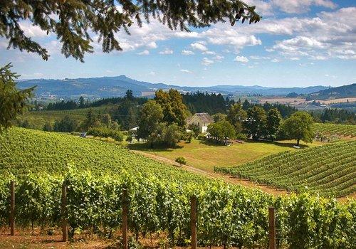 Oregon / Washington Wines