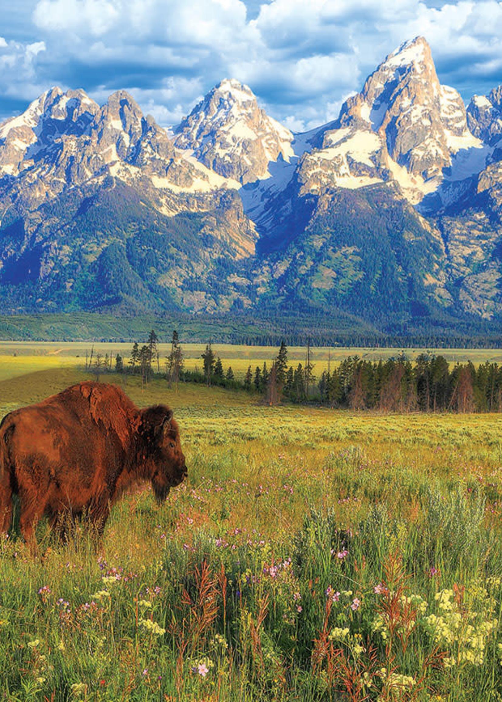 Eurographic Grand Teton National Park