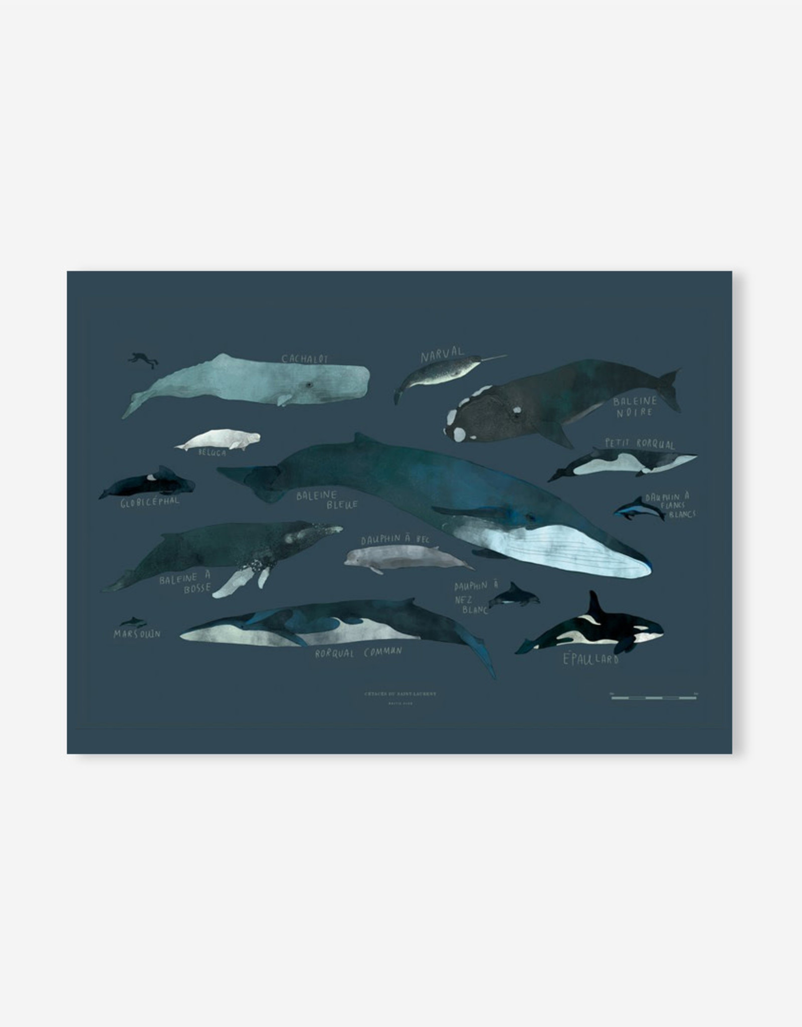 Baltic Club Art Print - Whales 12''x18''