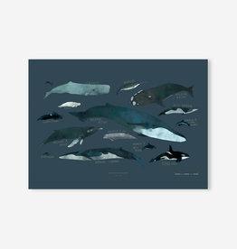 Baltic Club Illustration - Baleines 12''x18''