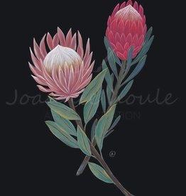 """Joannie Houle Affiche Protea 11""""x14"""""""