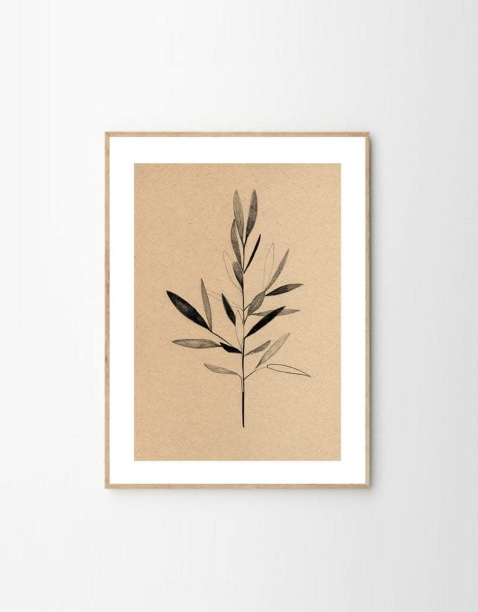 The Poster Club Print Olive - by Ekaterina Koroleva - 30x40 cm