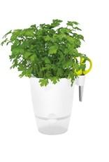 Brussels Herbs Tout-en-un - Blanc