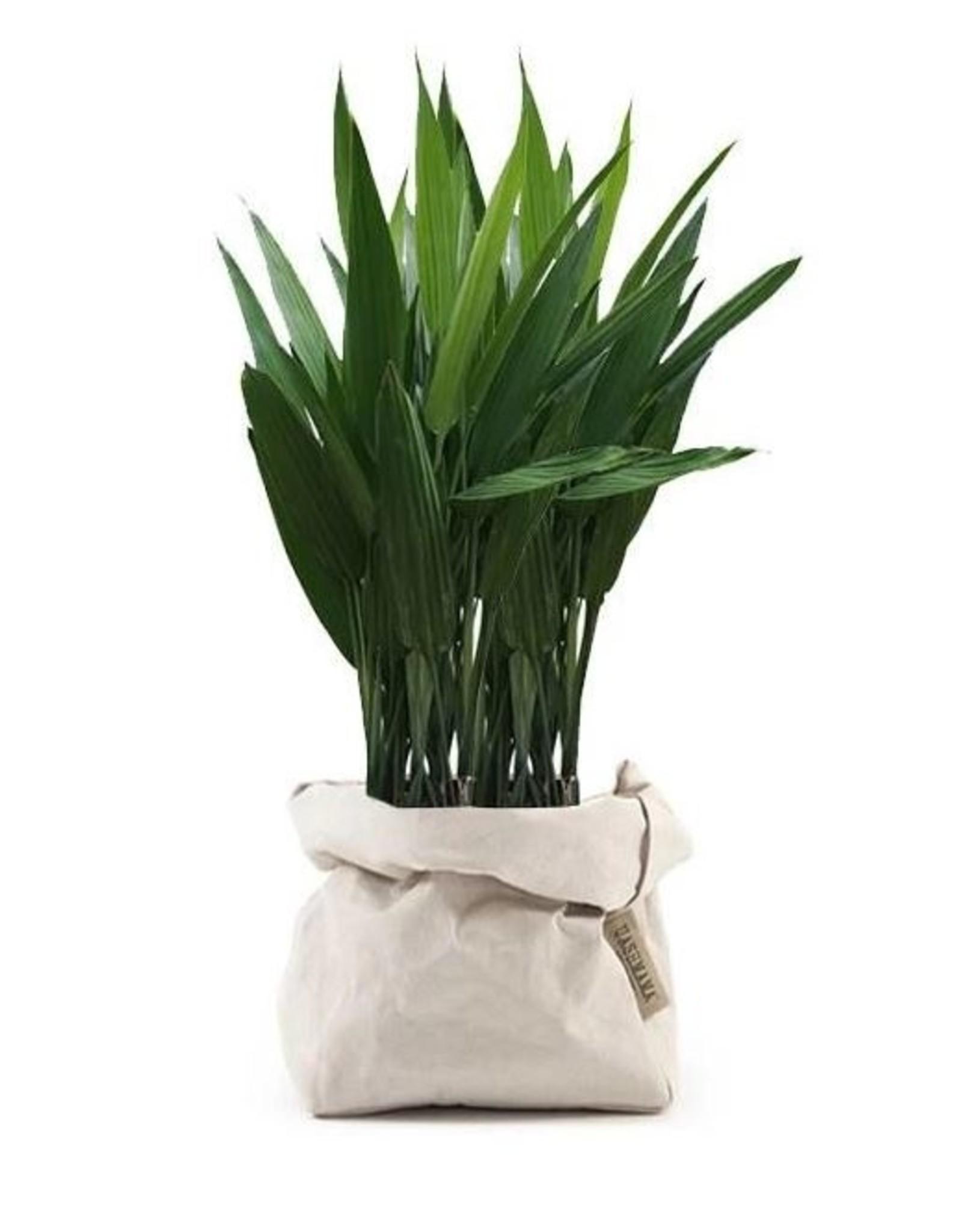 Uashmama Cashmere Paper Bag