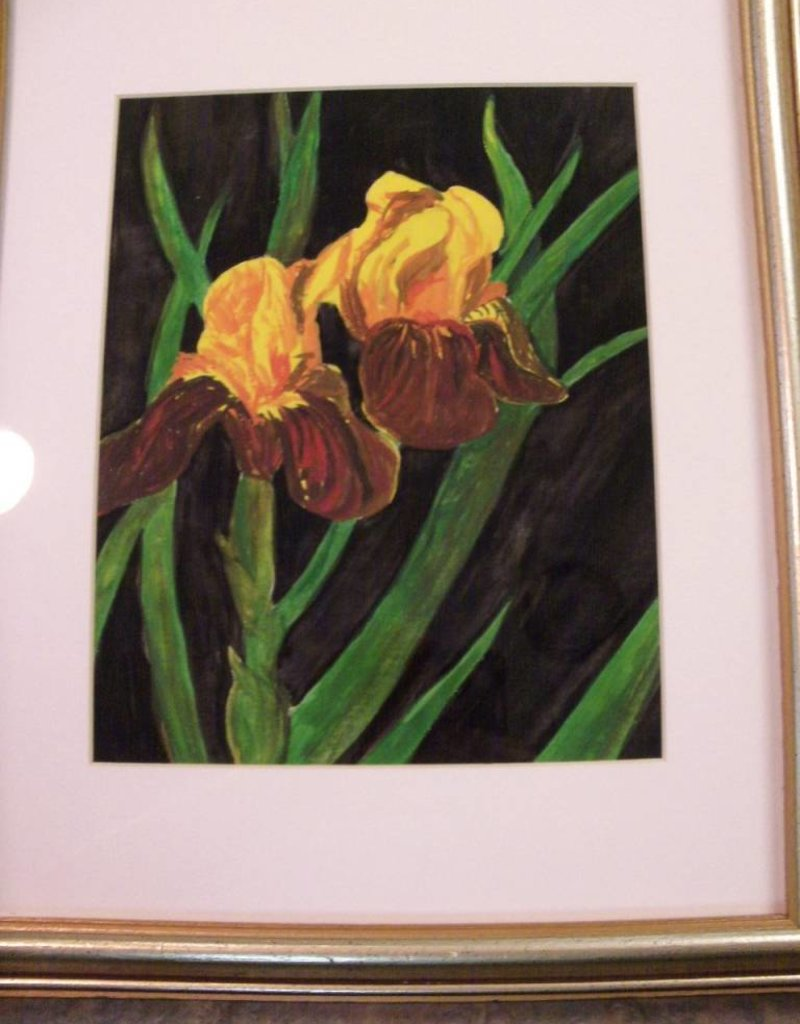 11 - Virginia Ackerman Iris