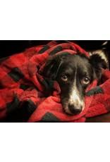 Tall Tails TALL TAILS Dog Blanket Hunter Plaid