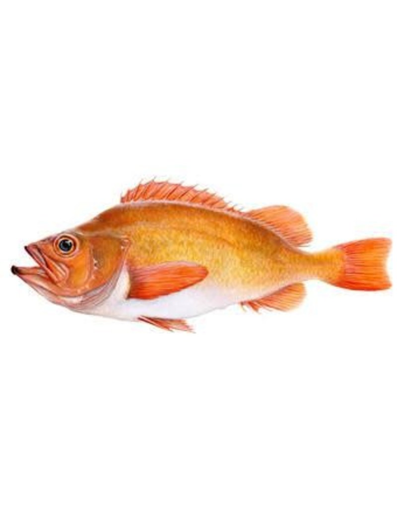 Icelandic+ ICELANDIC+ Redfish Skin Rolls Treat