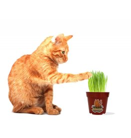 TIPSY NIP VERMONT CAT GRASS CO. Organic 4in Cat Grass