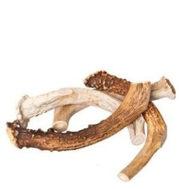 Yellowstone Elk Antler