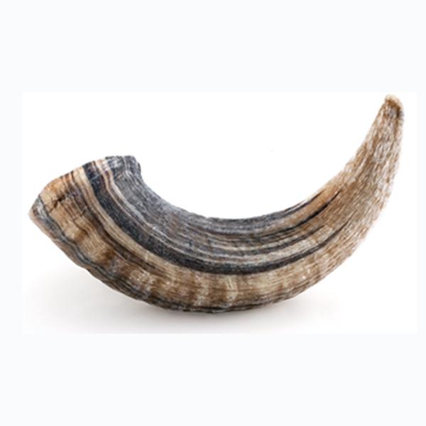 Icelandic+ Icelandic+ Lamb Horn Large
