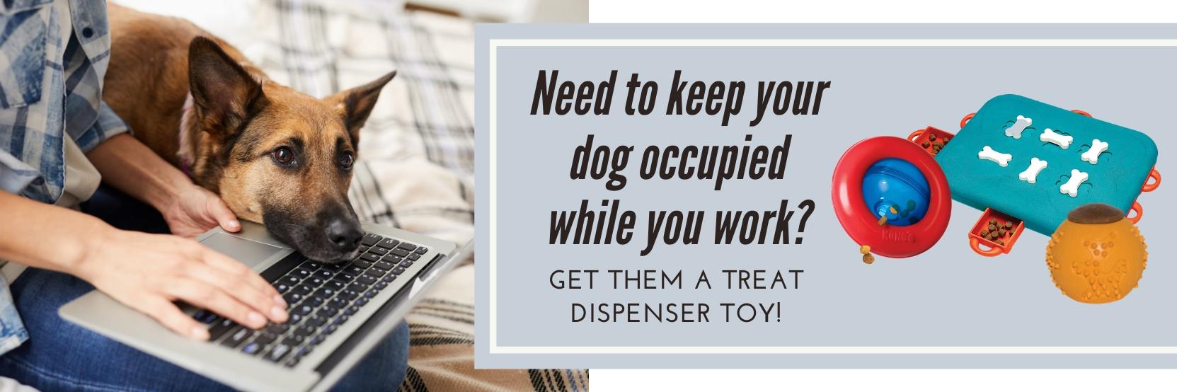 treat dispenser toys