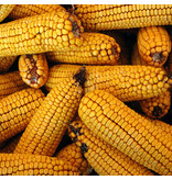 Bird's Choice Whole Corn Cobs pk of 10