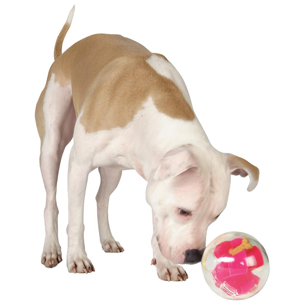 Planet Dog Orbee Tuff Mazee Pink