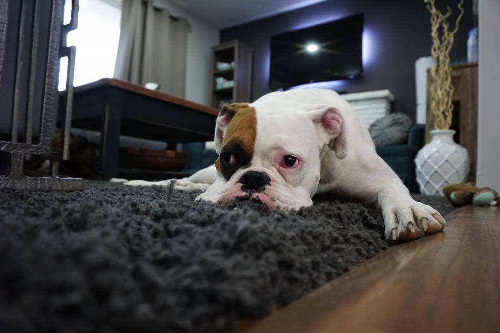 5 Household Items That Could Harm Your Pets
