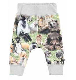 MOLO MOLO Pants Hairy Animals Sammy S18 18m