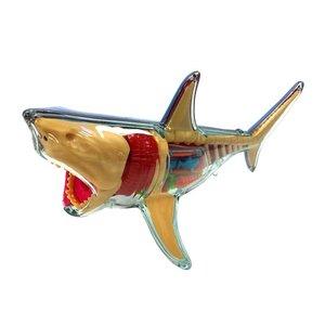 John Hansen John Hansen: X ray fun great white shark