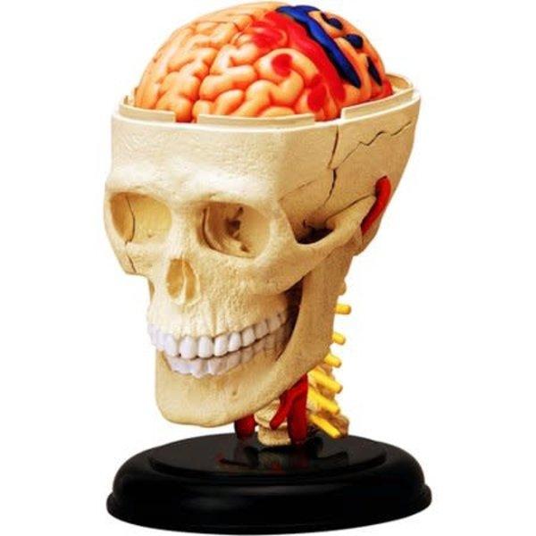 John Hansen John Hansen: 4-D Cranial Nerve Skull Anatomy