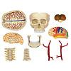 John Hansen: 4-D Cranial Nerve Skull Anatomy