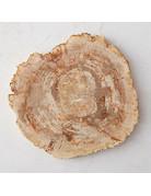 Petrified wood platter