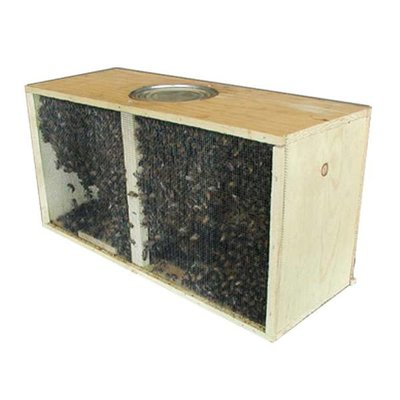 Bee Well Package Bees – Italian Hygienic – Local pickup - Pickens, SC