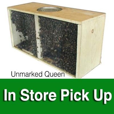 Package Bees - Italian Hygienic - Unmarked Queen - Local Pickup