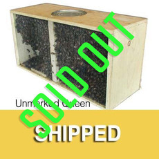 Package Bees – Italian Hygienic – Unmarked Queen - Shipped