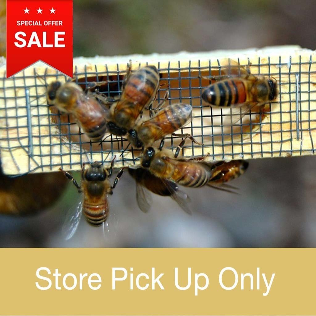 Bee Well Queen Bees - Italian - Store Pickup