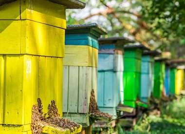 Bees for Sale