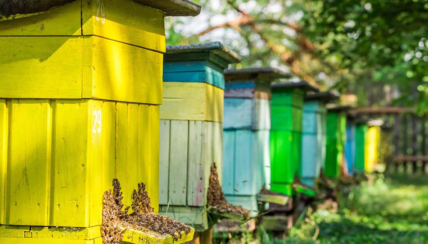 Beekeeping Protective Wear