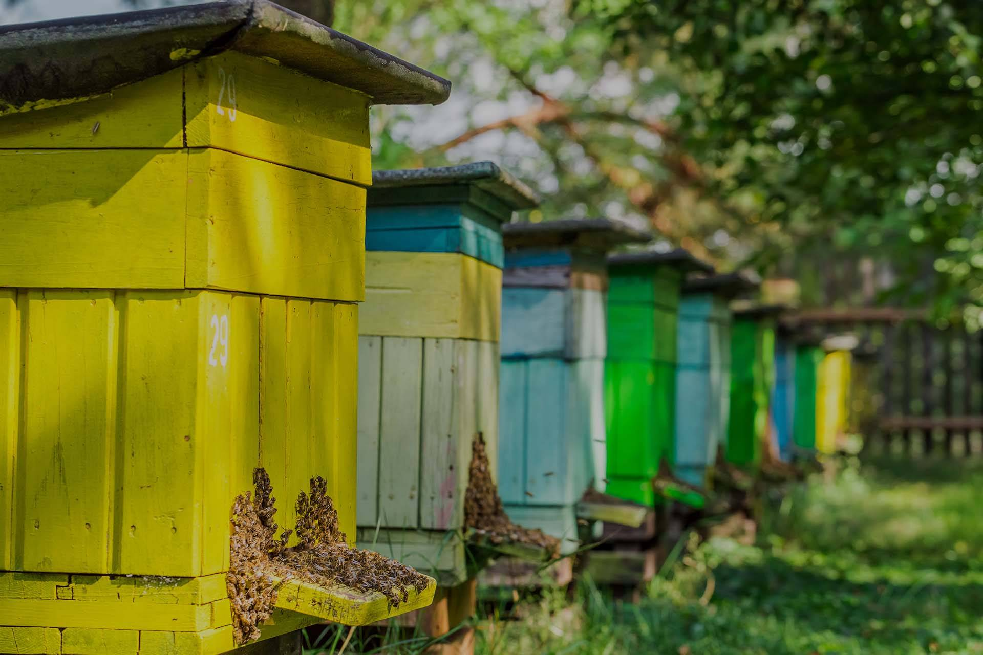 PACKAGE BEES, NUCS, AND QUEENS - NOW ON SALE