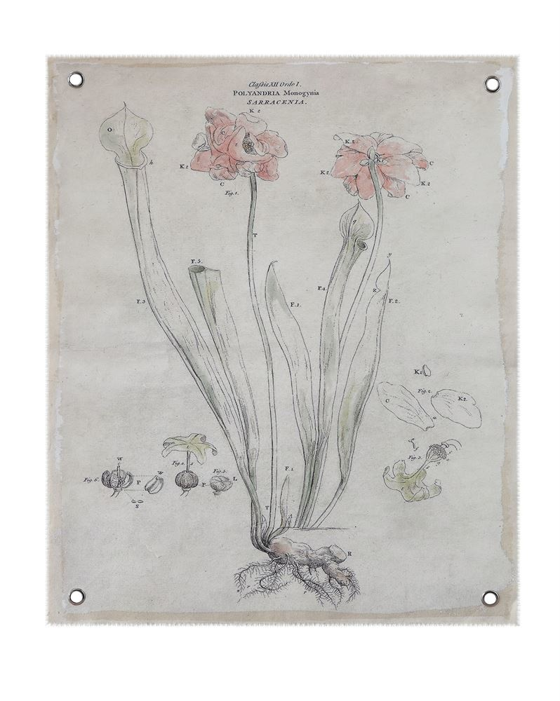 Floral Canvas Wall Decor - Polyandria