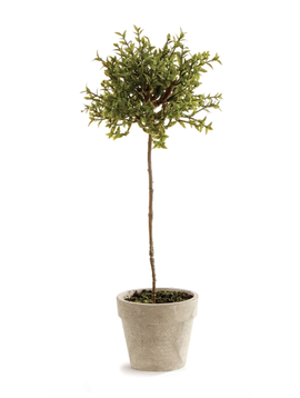 Thyme Topiary 13""