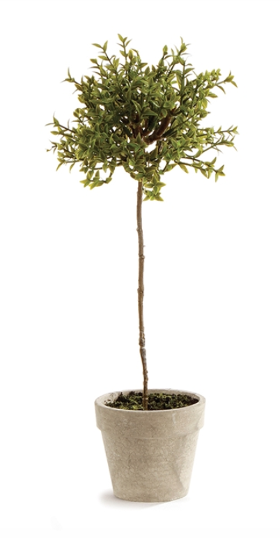 """Thyme Topiary 13"""""""