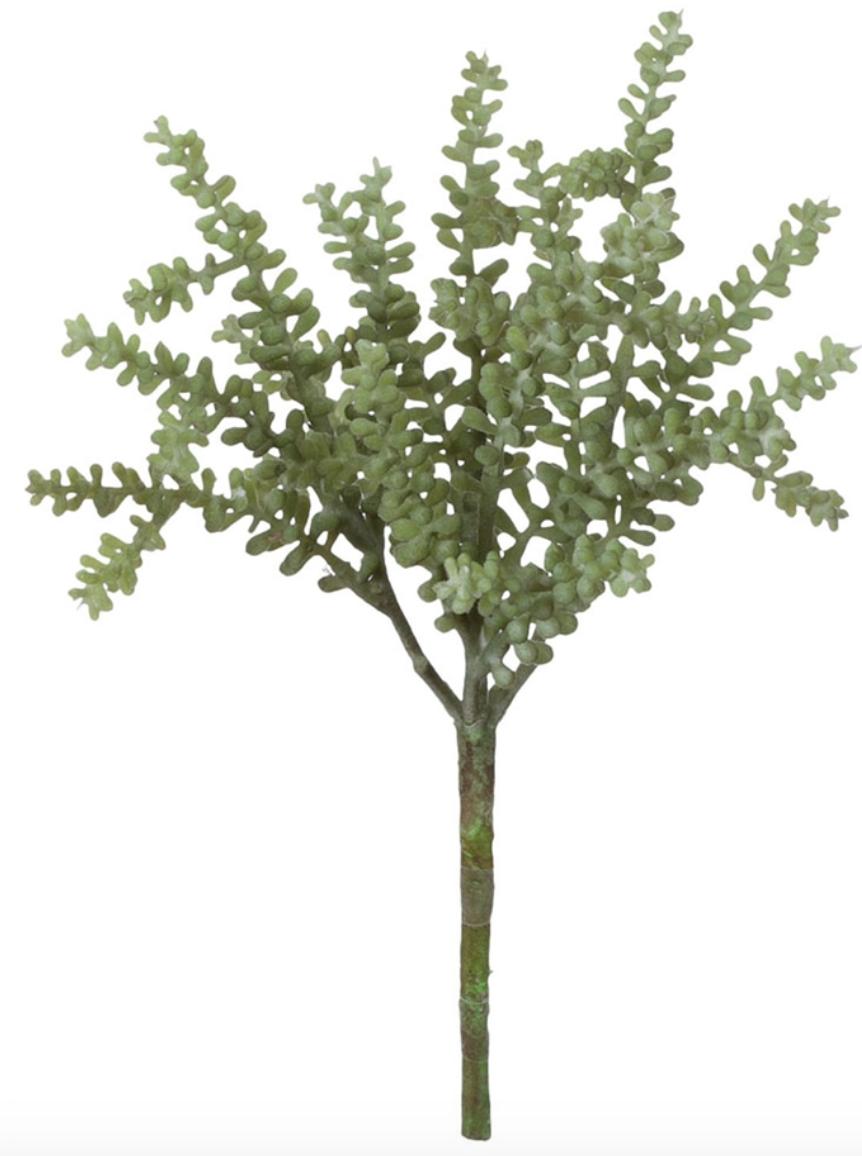"""Succulent 7""""L x 3.5 x 7H"""