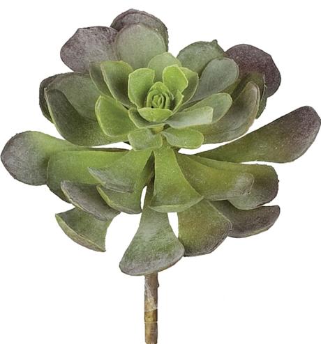 Echeveria Succulent  (Long Stem/Green)