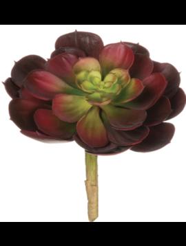 Echeveria Succulent (Red/Short)