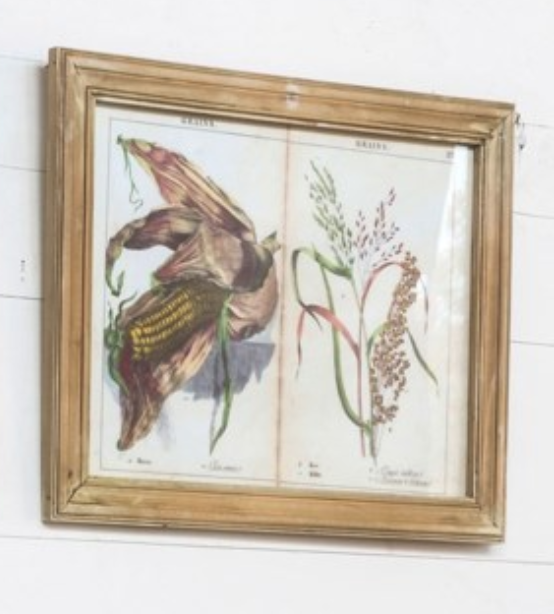 Grains and Grasses Prints (Framed)