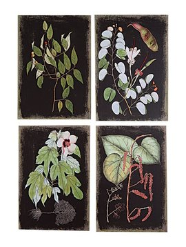 Black Background Botanical Wall Prints