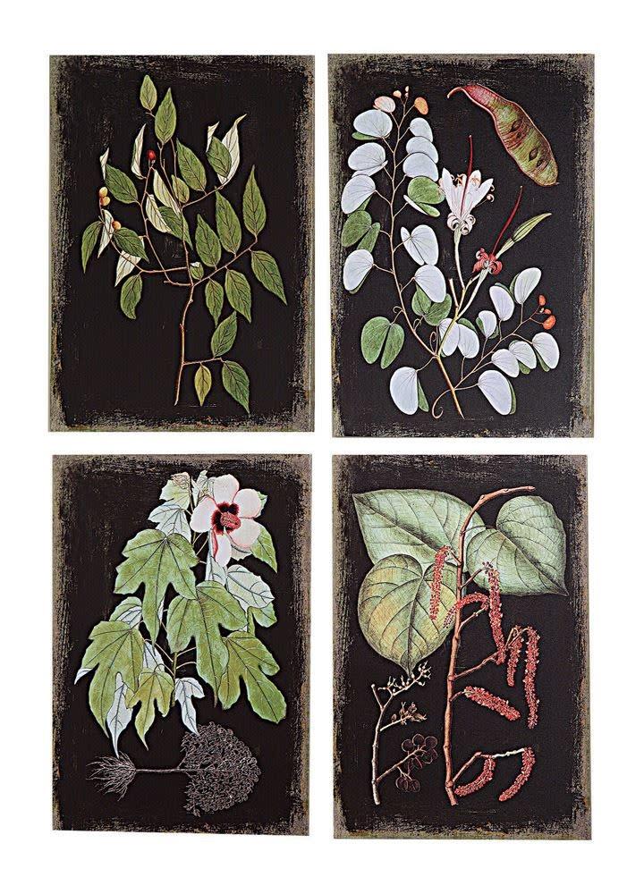 Black Background Botanical Wall Prints